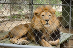Wildlife Waystation